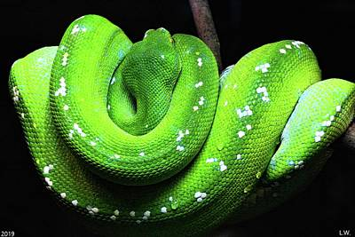 Photograph - Emerald Tree Boa by Lisa Wooten