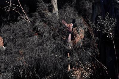 Photograph - Emerge by Eric Christopher Jackson