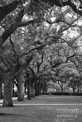 Photograph - Emmet Park Trees In Black And White by Carol Groenen