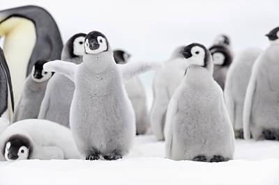 Emperor Penguin Art Print by Martin Ruegner