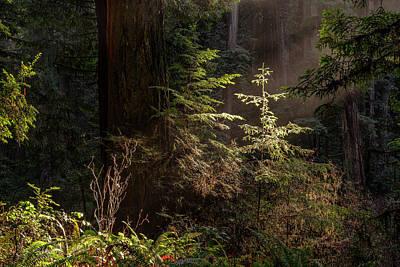Photograph - Enchanted Daybreak by ProPeak Photography