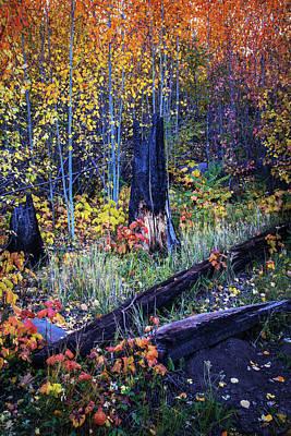 Photograph - Enchanted Forest by Elena E Giorgi