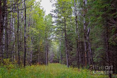 Photograph - Enchanted Forest by Susan Rydberg