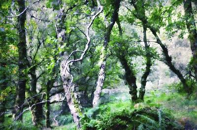 Photograph - Enchanted Forest. The Kingdom Of Thetrees. Glendalough. Ireland by Jenny Rainbow
