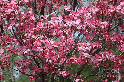 Photograph - Enchanted Pink Dogwood Tree by Carol Groenen