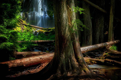 Photograph - Enchanting Forest by Cat Connor