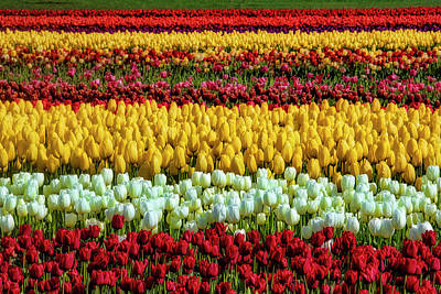 Photograph - Endless Beautiful Tulip Fields by Garry Gay