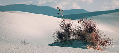 Photograph - Endless Beauty by Doug Sturgess