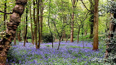 English Bluebell Wood Original
