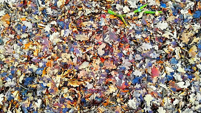 Photograph - English Woodland Floor In Wintertime by Chris Gill