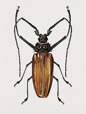 Rolling Stone Magazine Covers - Enoplocerus Armillatus illustrated by Charles Dessalines D Orbigny 1806-1876 by Charles Dessalines