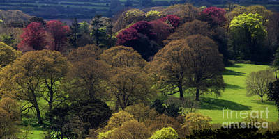 Photograph - Enys Gardens Spring Trees Panorama by Terri Waters