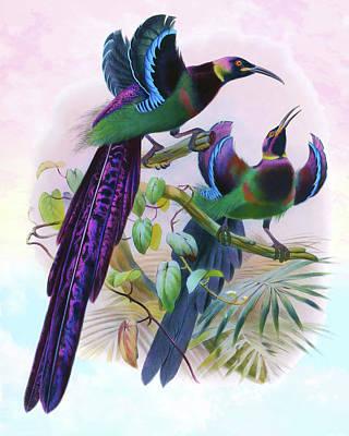 Animals Drawings - Epimachus Ellioti, Elliots Bird of Paradise by Joseph Wolf - Joseph Smit