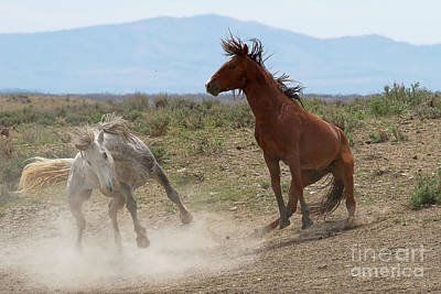 Photograph - Equine Explosion by Jim Garrison