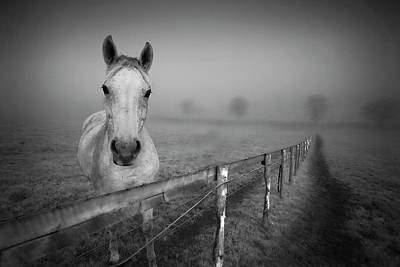 Photograph - Equine Fog by Taken With Passion