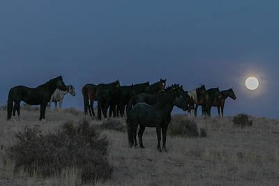 Photograph - Equine Moonshine by Kent Keller