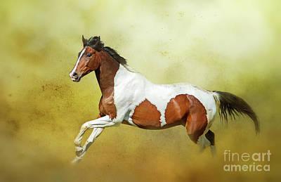 Photograph - Equine... by Nina Stavlund