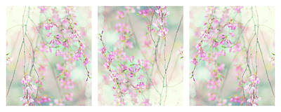 Photograph - Sweet Cherry Triptych by Jessica Jenney