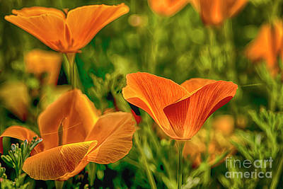 Fantasy Royalty-Free and Rights-Managed Images - Eschscholzia by Veikko Suikkanen