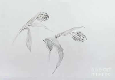 Drawing - Estella Rijnveld Two by Odile Kidd
