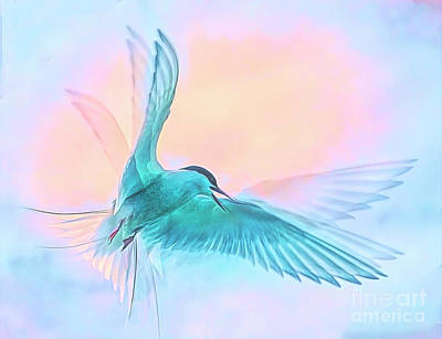 Photograph - Ethereal Arctic Tern by Brian Tarr