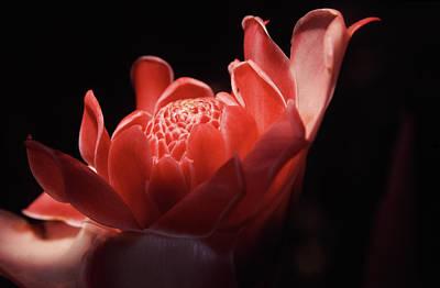 Botanical Photograph - Etlingera Elatior Jinghong Botanical by Romana Chapman