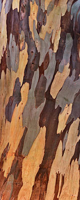 Photograph - Eucalyptus Shape And Form by Leland D Howard