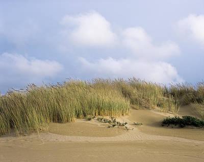 Photograph - European Beachgrass by Robert Potts