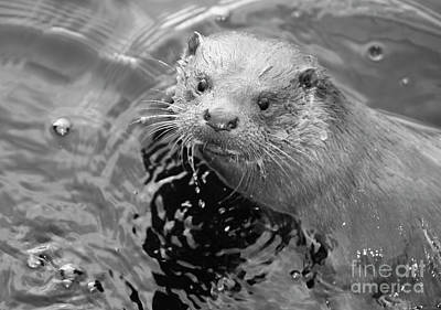 Ambleside Wall Art - Photograph - European Otter by Science Photo Library
