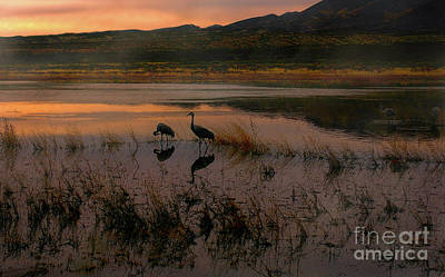 Photograph - Evening Duet by Susan Warren