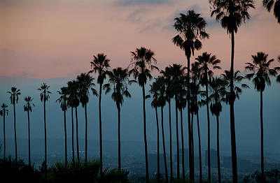 Photograph - Evening Palms With City Background by Mitch Diamond
