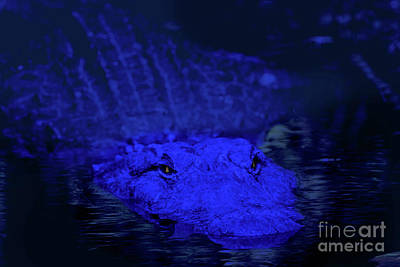 Photograph - Everglades At Night by Ed Taylor