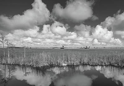 Photograph - Everglades by Bill Martin