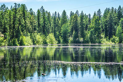 Ethereal - Evergreen Forest Reflecting In Lake by Alex Grichenko