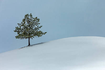 Photograph - Evergreen Hill by Todd Klassy