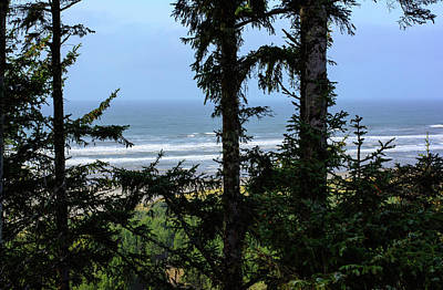 Photograph - Evergreens And Sand by Tikvah's Hope
