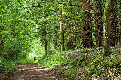 Photograph - Exmoor National Park Dunster Forest by Flavio Massari