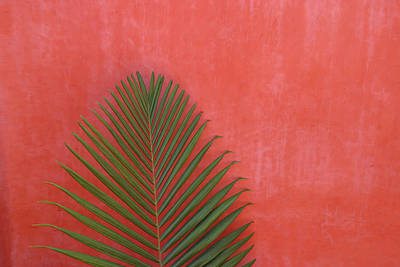 Object Photograph - Exotic Background by Lucgillet