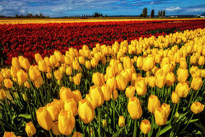 Photograph - Expansive Field Of Tulips by Garry Gay