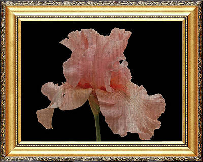 Photograph - Exquisite Bearded Iris by Clive Littin