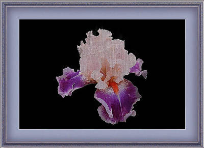Photograph - Exquisite Bearded Iris Framed by Clive Littin