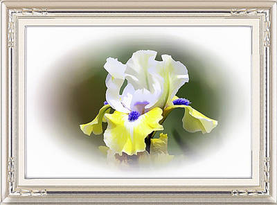 Mixed Media - Exquisite Iris Framed Metal Print by Clive Littin