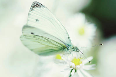 Extreme Close Up Of White Butterfly & Art Print by Les Hirondelles Photography