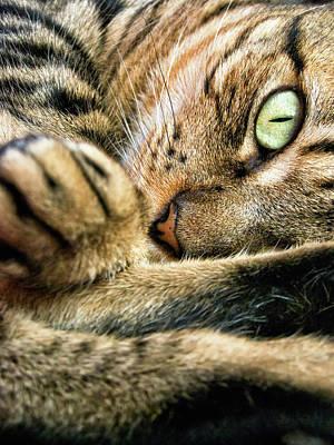 Photograph - Eye Cat by Ramón Espelt Photography