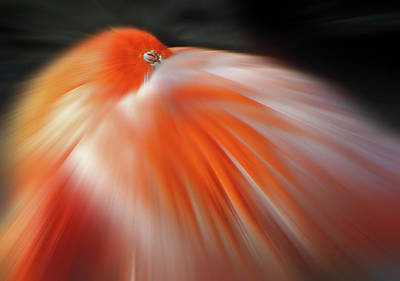 Photograph - Eye Of The Flamingo by Jeff Brunton