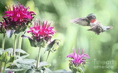 Vermeer Rights Managed Images - Eyeing The Bee Balm Royalty-Free Image by Tina LeCour
