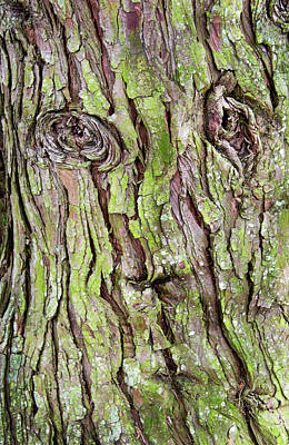Photograph - Face In The Tree Bark by Gary Slawsky