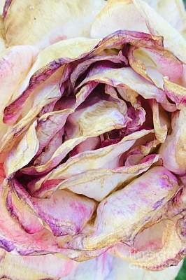 Photograph - Faded Rose by Carol Groenen