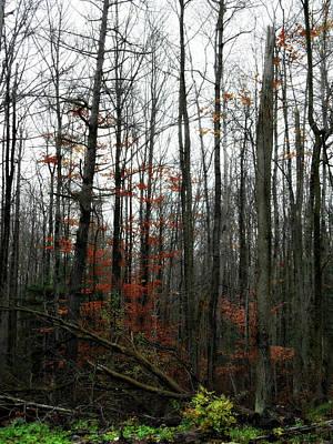 Photograph - Fading Fall by Cyryn Fyrcyd