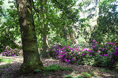 Photograph - Fairy Forest Of Blooming Rhododendrons 10 by Jenny Rainbow